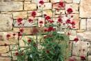 kvetiny_zed