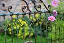 plot - kvetiny